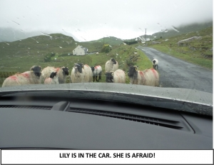Globe Théâtre - Lily Poppins in Ireland - The sheep and the car